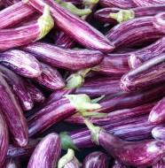 AUBERGINE - variété recette conservation