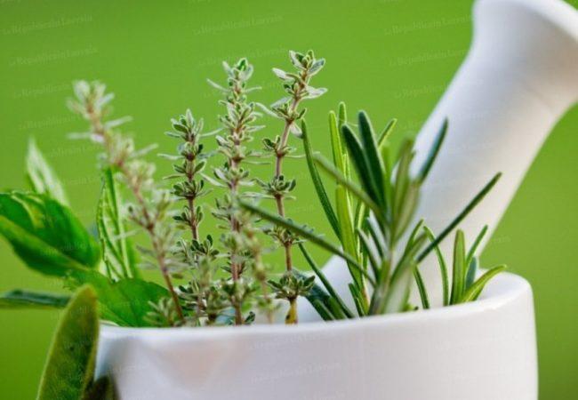 Les herbes aromatiques : Ciboulette