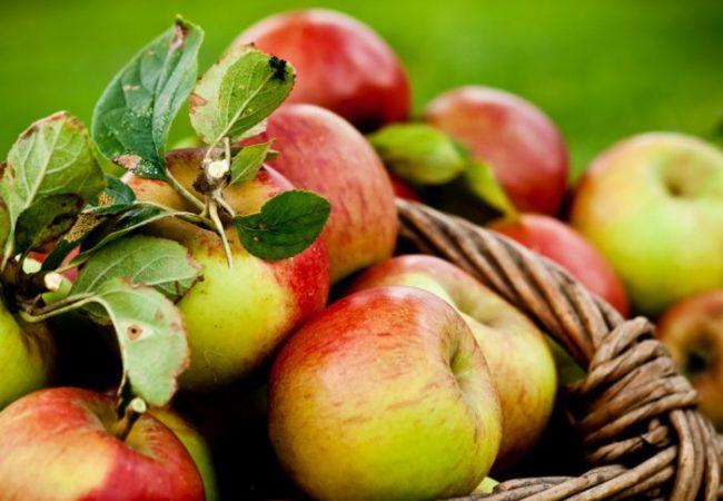 10 recettes succulentes à faire avec des pommes