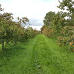 Highbank Organic Apple Farm
