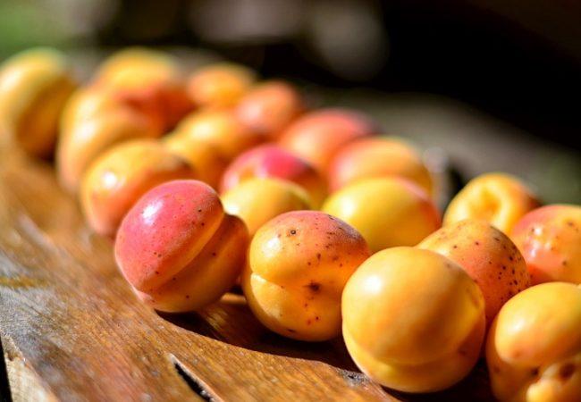 L'abricot : variétés, recettes, conservation…