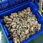 Charente Maritime Ostréiculture et dégustation huîtres