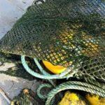 Charente Maritime Ostréiculture et degustation d'huître