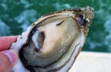 charente maritime dégustation huitres