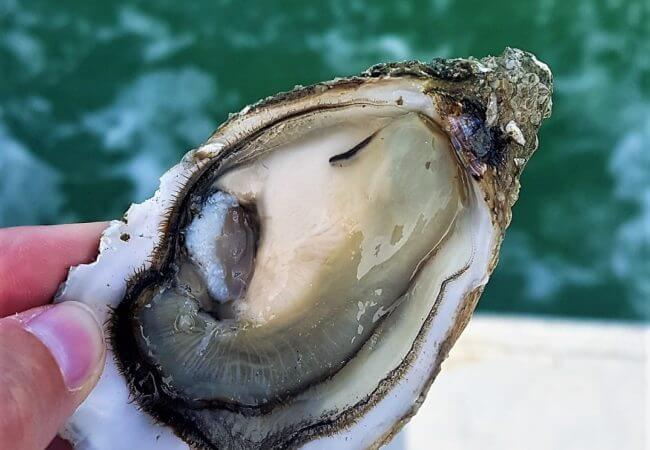 Charente Maritime : Ostréiculture et dégustation d'huîtres