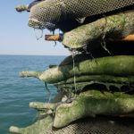 charente maritime ostréculteur dégustation huitres